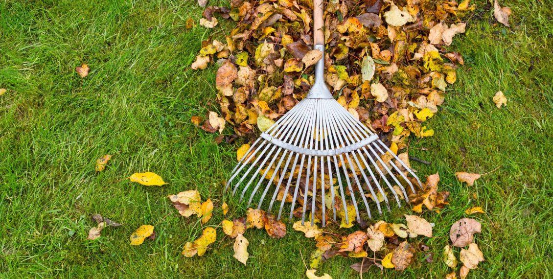 raking leaves, fall