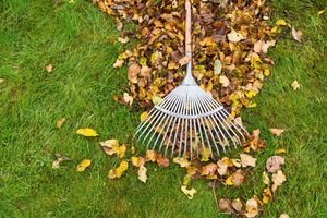 raking leaves, fall